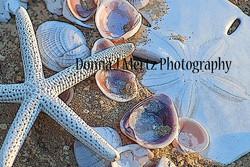 shells star and dollar.jpg