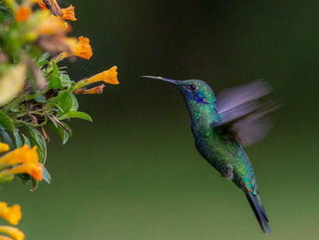 """Die Färinger und der flinke kleine Kolibri: """"Ich tue das, was ich kann. Ich tue mein Bestes."""""""