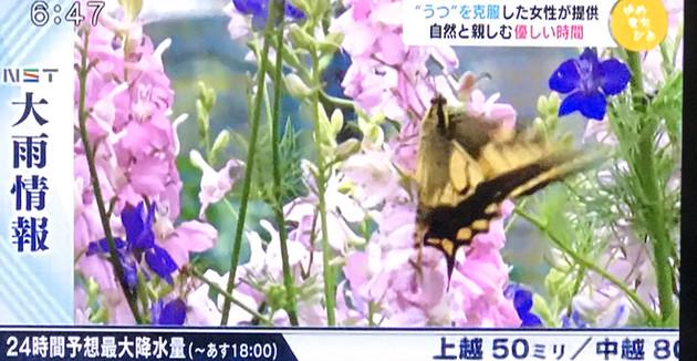 IMG_6787.jpg