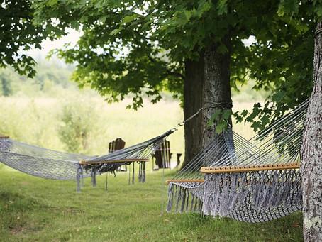 Oser les vacances pour retrouver ses racines et changer ses feuilles…
