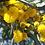 Thumbnail: Miel de Acacia
