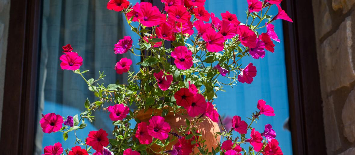 Flores Font d'Torres en Morella