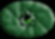 Logo%20ny_edited.png