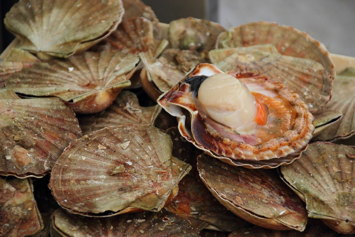mussels-523622_1280.jpg