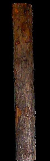 Baum.tif