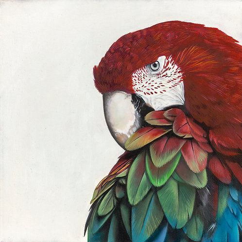 'Macaw' Digital Straight Print