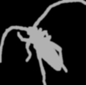 Beetle CG 5C.png