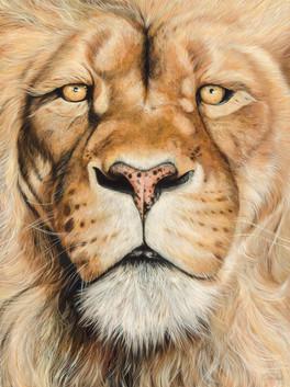 Cat - Lion 16419 final.jpg