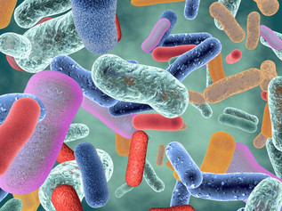 Heart Health and More Linked to Gut Microbiome