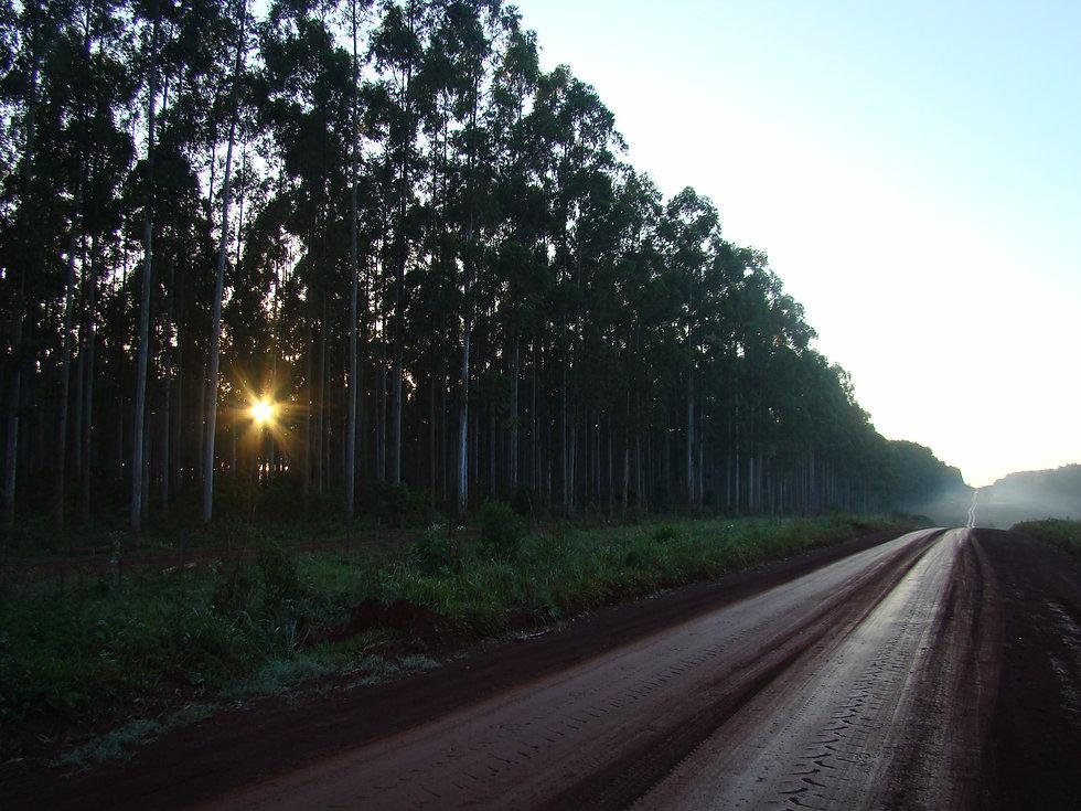 bosque camino atardecer