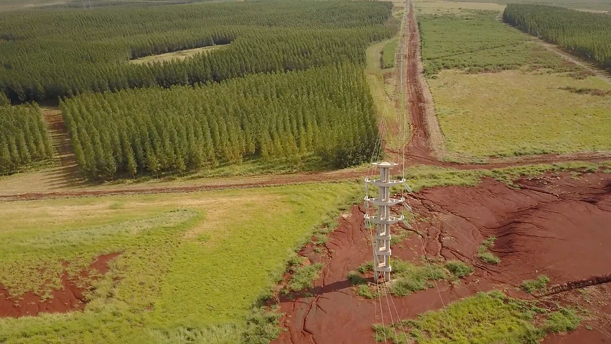 Energía electrica forestal