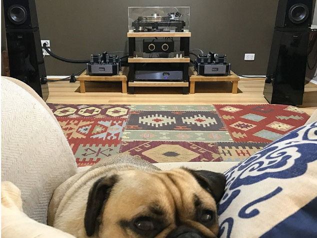 Black pre-amplifier with gold trim and a perspex lid. And a very cute pug!