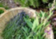 herbs%20in%20basket_edited.jpg