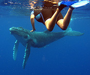 4 Scheduled - Whale Watching Tours in Tonga - Whaleswim Adventures