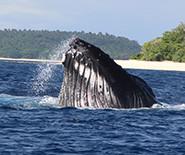whalesinparadise_2013_0388_spyhop.jpg