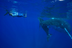 whale watching and swimming