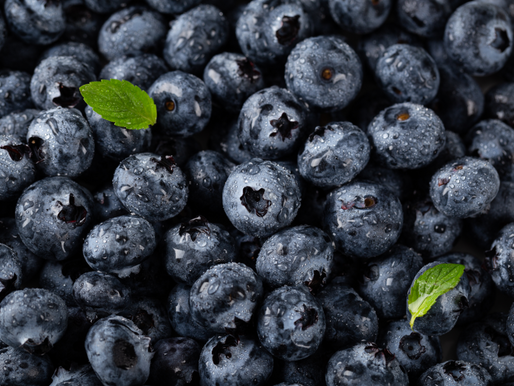 Truly Wild Blueberries Offer Superior Health Benefits
