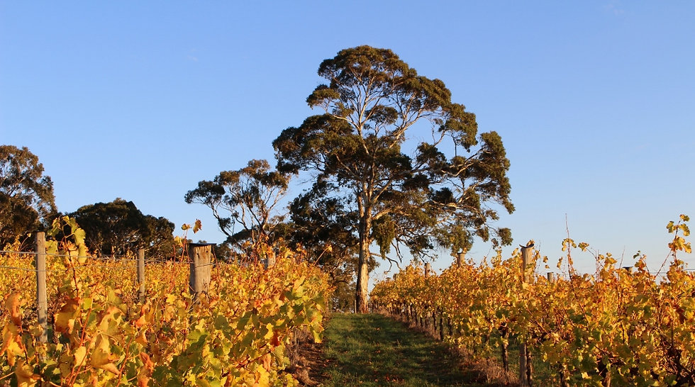 Autumn in the Vineyard (1024x571).jpg