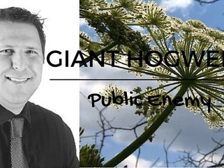 Giant Hogweed - Public Enemy, what Property Owners need to know!