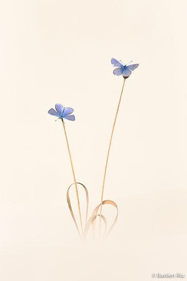 Bouquet ailés