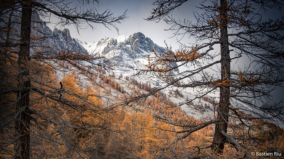 L'automne V