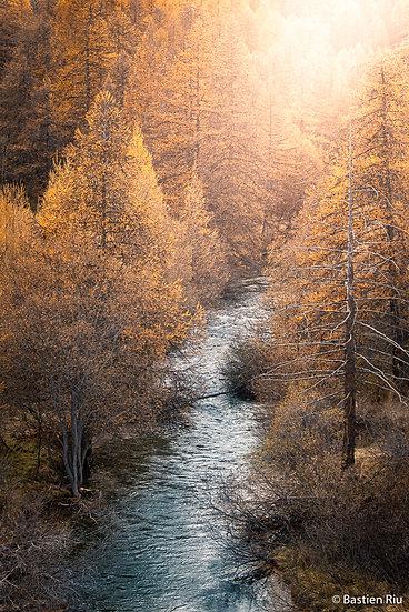 L'automne VI