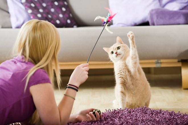 Girl playing with her cat.jpg