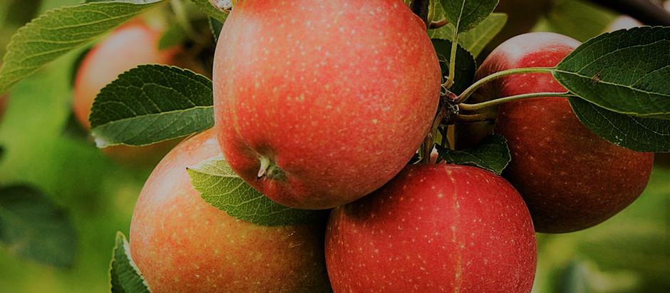 That Apple, Forever