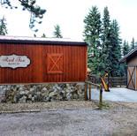 Harp at Red Fox Alpaca Ranch - Evergreen CO