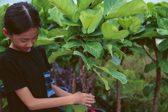 떡깔나무 (외목대)가드닝