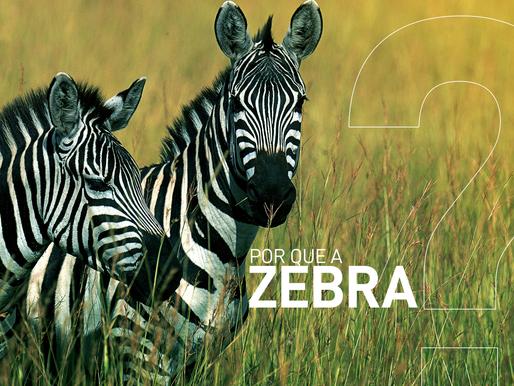 Por Que a Zebra?
