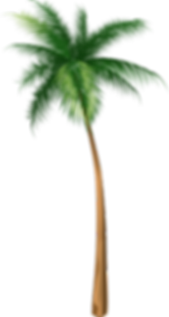 41421-arecaceae-coconut-tree-illustratio