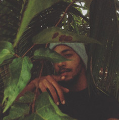 Prince Pronto in the Tropical Jungle