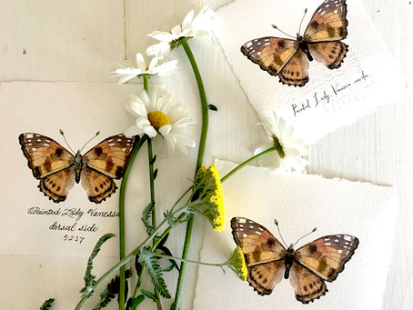 BUTTERFLIES, PINTEREST & VIDEOS