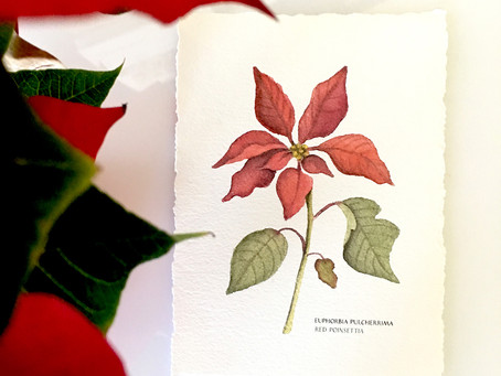 CHARLIE BROWN POINSETTIA