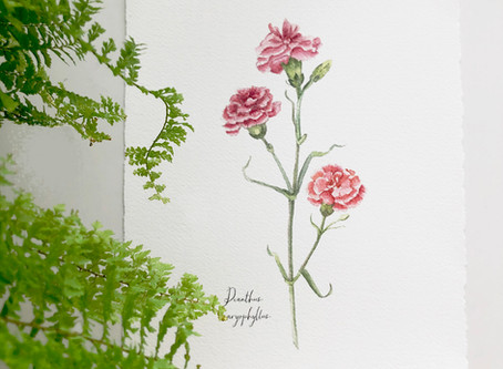 CARNATIONS FOR A NEW YEAR