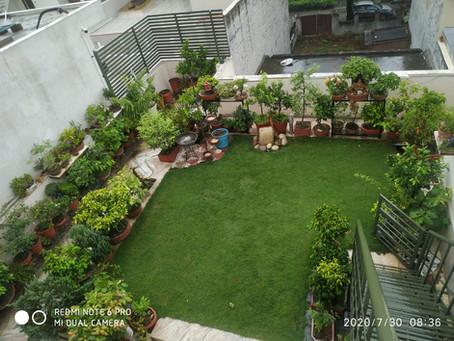 My Terrace Garden..
