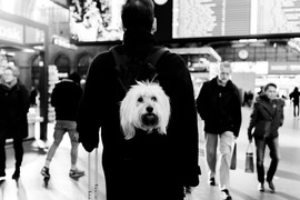 """""""The perks of being a backpack dog"""" © Mark Wyss"""