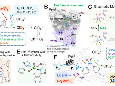 Bio-inspired Molybdenum Catalyst for Perchlorate Reduction to Remediate Plant-ready Martian Soil