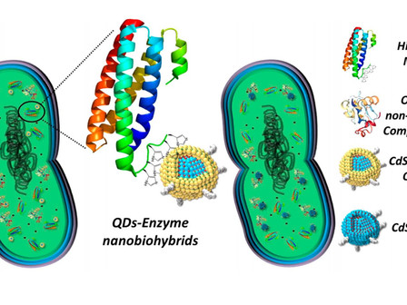 Nanorg Bacteria Factories with QDs to Convert CO2 into Biofuels, Plastics, Chemicals with 200% Yield