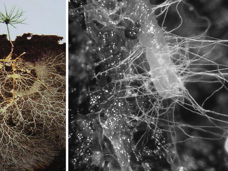 Alliance of Hyphae Bacteria, AM Fungi, and Plants Could Be the Key to Enriching Soil with Nutrients