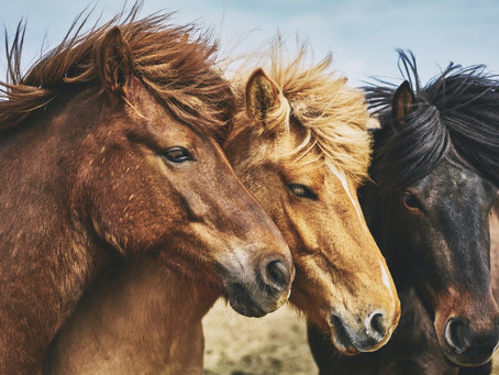Mental Health Awareness Month: What Is EAGALA Equine Therapy?