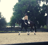 Dressage riding in every season