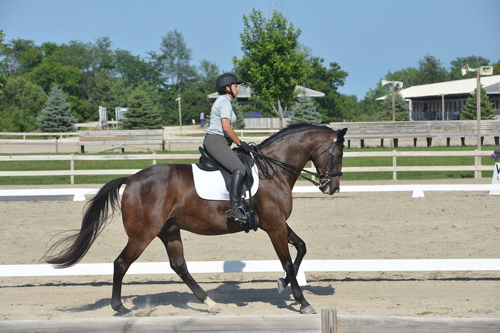 Online courses to become a better dressage rider