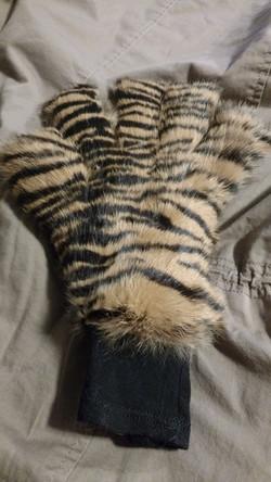 Tiger palm.jpg