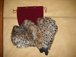 Pair Cheetah.JPG