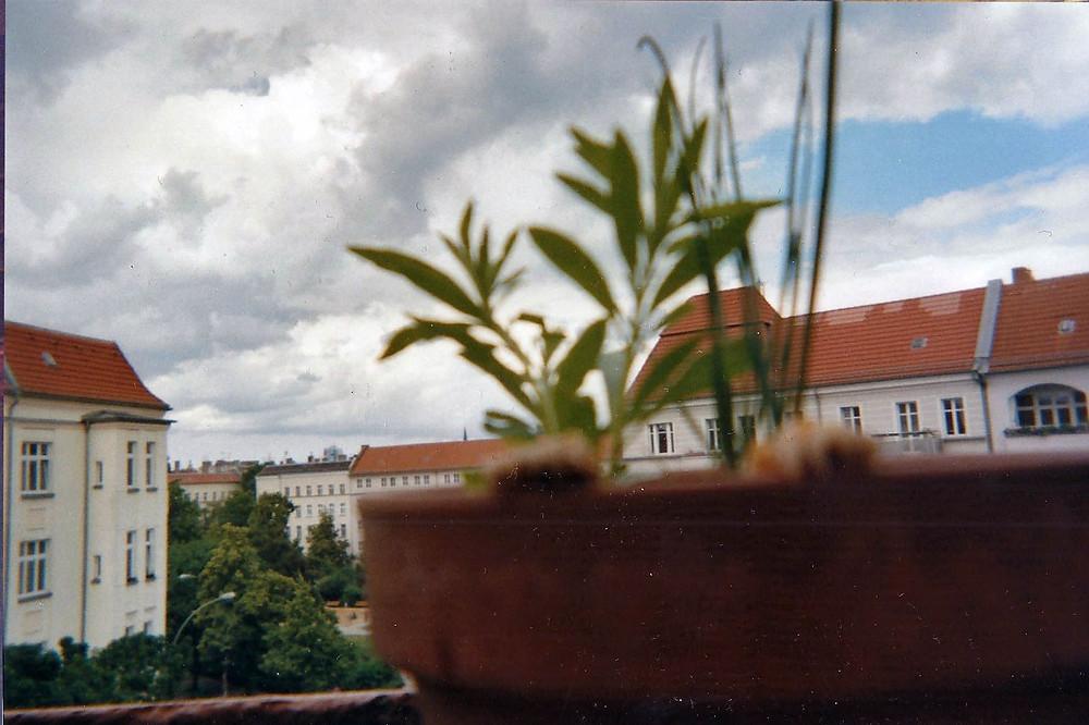balkon-pflanze