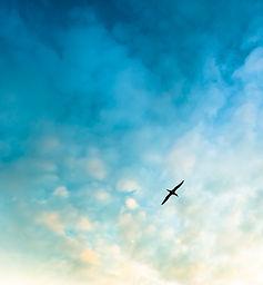 lightroom tutorials bird sky_AES4526.jpg