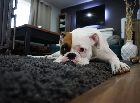 Helping Your Dog Cope Through Their Anxiety