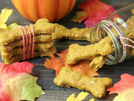 DIY Pumpkin Doggy Treats